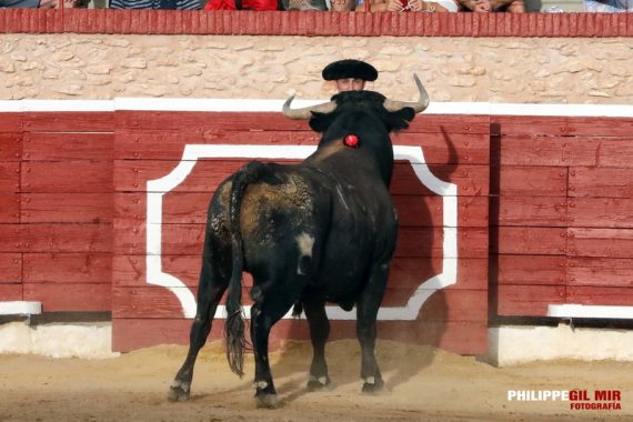 XXX Jornadas Taurinas en Tarazona de la Mancha ¡Que salga el Toro!