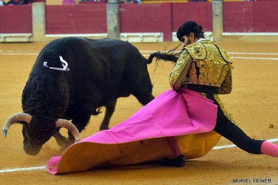 Galería: Así vio Muriel Feiner los triunfos de Juan José Padilla y Ginés Marín