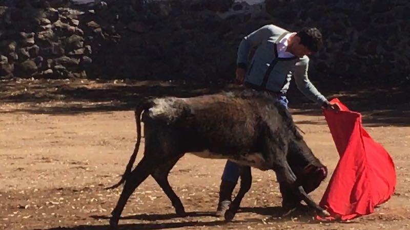 El Chihuahua ensayó y en grande en la ganadería San Mateo
