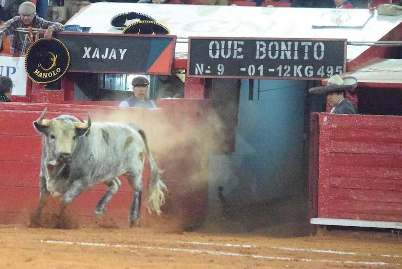 En la Monumental México… Réquiem por un gran toro encastado: ¡Qué bonito!