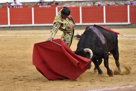 En Brihuega… Morante y Talavante cortan una oreja en La Muralla