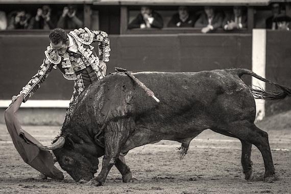 Lo dice Pepe Mata… Extraordinario toro de Adolfo Martín para un gran artista, Pepe Moral