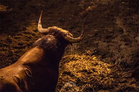 Aquí el sorteo de los toros de Dolores Aguirre para la última de Mont de Marsan