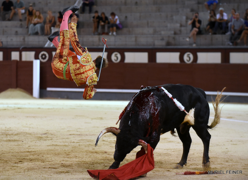 En Madrid… Vuelta para Abel Robles y unos señores novillos de Doña Dolores