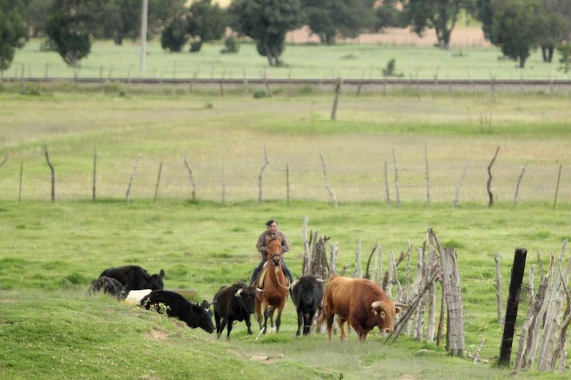 Los toros de Felipe González han partido para Uriangato