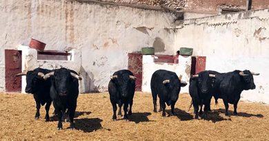 Aquí el sorteo de los toros de Fermín Bohórquez para la segunda de la Castellón