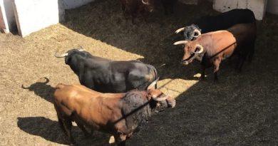 Orden de lidia de los toros de José Vázquez para este sábado en Gijón