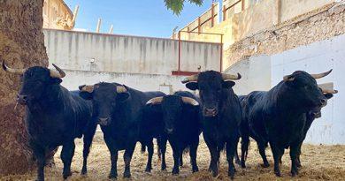 Orden de lidia de los novillos de Lagunajanda para esta tarde en Murcia