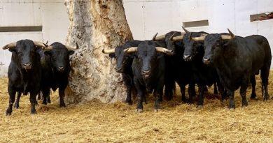Orden de lidia de los toros de La Palmosilla para esta domingo en Murcia