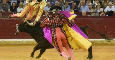 Parte médico del matador de toros Miguel Ángel Perera