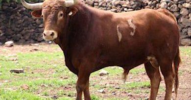 Dos de estos toros de Jaral de Peñas serán para Roca Rey en Guadalajara