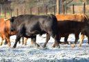 Vistos y reseñados los toros de Alcurrucén para Valdemorillo
