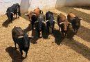 Orden de lidia de la corrida mixta para la segunda de abono en Huelva