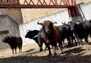 Orden de lidia de la corrida de El Torero para el Mano a Mano en Plasencia