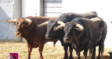 Orden de lidia de los toros de Garcigrande para la tercera de Nîmes