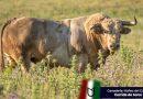 Entre y conozca los toros de Núñez del Cuvillo para Leganés