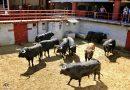 Orden de lidia de los toros de Juan Pedro Domecq para la última de Córdoba