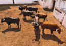 Orden de lidia de los toros de Garcigrande y Domingo Hernández para Valladolid
